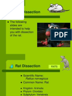 rat dissection review 1