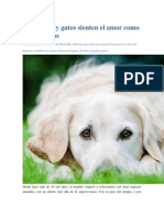 Los Perros y Gatos Sienten El Amor Como Los Humanos