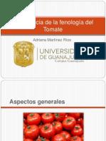 Importancia de La Fenología Del Tomate