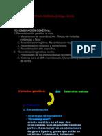 Tema5Recombinacion1SemII2010