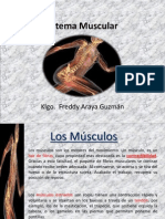 Los Musculos