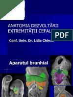 AparatBranhial2013
