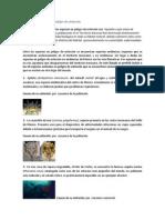 Animales Mexicanos en Peligro de Extinción