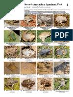 Identificacion de Anfibios de Ayacucho y Apurimac