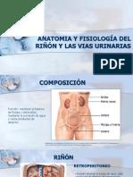Anatomia y Fisiología Del Riñón y Las Vias