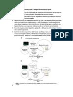Bronquiolitis Aguda y Laringotraqueobronquitis Aguda Resumen