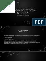 Embriologi System Urology