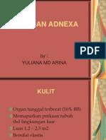 Kulit Dan Adnexa Kbk