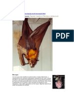 Morcegos.doc