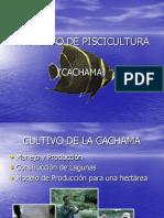 Proyecto de Piscicultura en el levante y Engorde de Cachama Hibrida