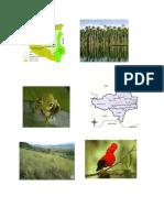 Historia Flora y Fauna