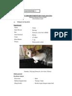 Edited - Pembahasan Kasus Bedah Individu Oh Kucing Ihsan
