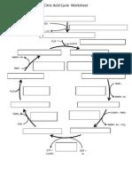 Citric Acid Cycle Worksheet