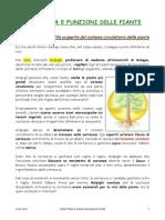 STRUTTURA_E_FUNZIONI_DELLE_PIANTE_1.pdf