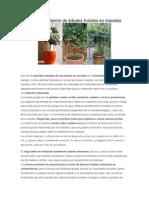 Todo Sobre El Plantío de Árboles Frutales en Macetas
