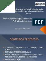 Aula 3 - Morfofisiologia Cardiaca