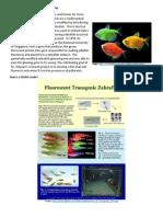glofish pets