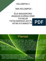 plantae.ppt