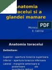 anatomia toracelui si glanda mamara