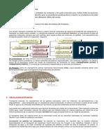 1. Guia Decimo Circulacion en Plantas