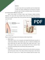 Lo 1 Anatomi Gingiva