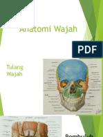 Anatomi Wajah Bm1 Aaa