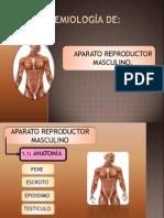 Seminario Organos Reproductores Masculinos Final
