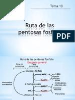 Ruta de las pentosas Fosfato