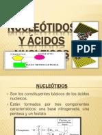 ESTRUCTURA DE LOS ACIDOS NUCLEICOS.pptx