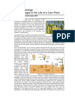 Plant Physiology Phenology of Corn