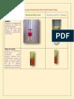 Pruebas Bioquímicas Para Escherichia Coli