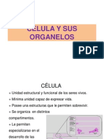 Organelos Celulares 2014-2