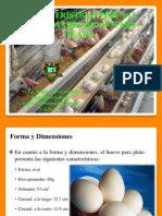 Características Físicas y Químicas Del Huevo Para Plato