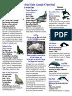 Marine Mammals of Puget Sound