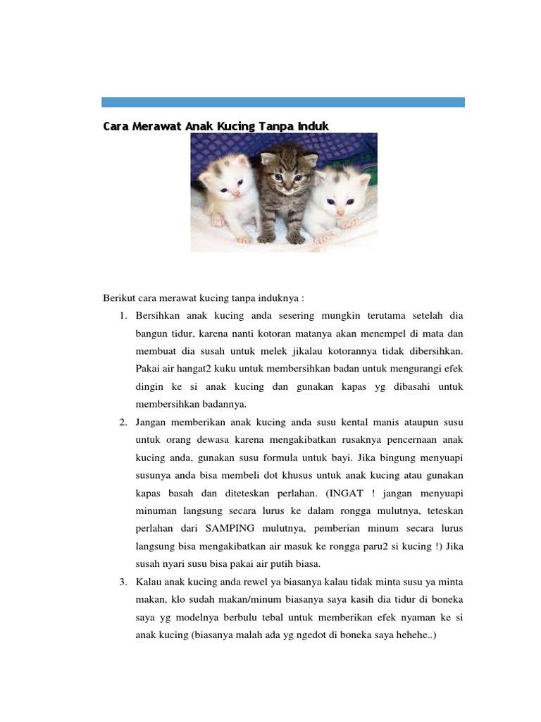 Cara Merawat Anak Kucing Tanpa Induk Docx