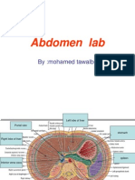 Abdomen Lab (2)