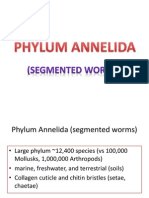 PHYLUM ANNELIDA-1.pptx