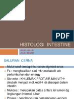Histologi Intestine Dr.muhdar