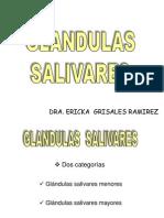 Glandulas_Salivales