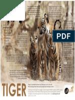Tiger at a Glance - CubCluba