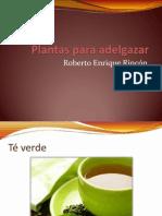 Plantas para adelgazar