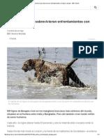 Los Hombres Que Sobrevivieron Enfrentamientos Con Tigres Salvajes - BBC Mundo