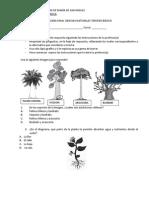 prueba final 3° BASICOccmCIENCIAS.docx