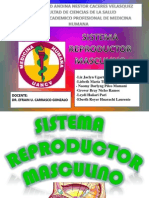 SISTEMA REPRODUCTOR MASCULINO EDITADO.pptx