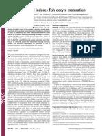 Diethylstilbestrol Induces Fish Oocyte Maturation