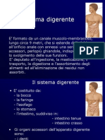 Anatomia del Digerente