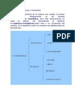 Biomoleculas Organicas y Inorgánicas