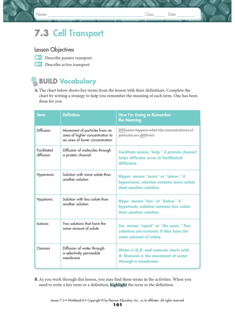All Grade Worksheets Diffusion And Osmosis Worksheet Answers – Diffusion and Osmosis Worksheet