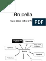 Brucella Flavio Sattui