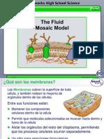 El Modelo Del Mosaico Fluido